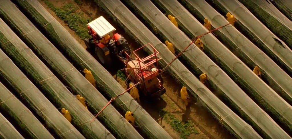 pesticides agriculture