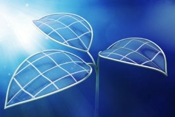 Feuille bionique 2.0 photosynthèse harvard énergie carburant