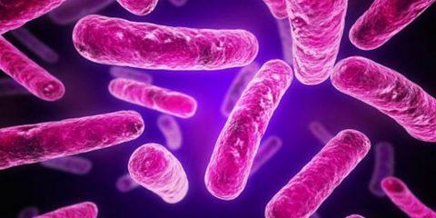 superbactéries résistance antibiotiques