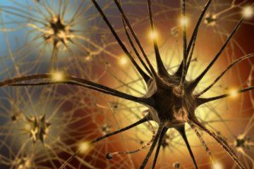 neurone synapse fonctionnement mécanisme cerveau intelligent oubli mémoire souvenir