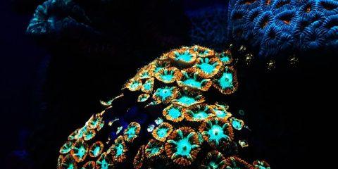 corail coraux récif