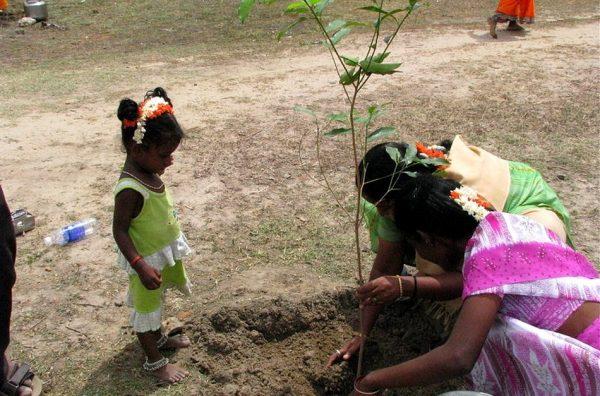 Record de reforestation : l'Inde a planté plus de 66 millions d'arbres en à peine 12 heures