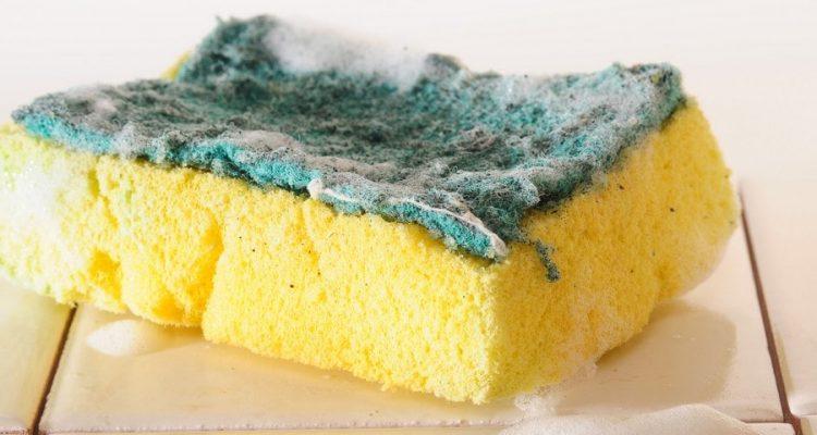 eponge sale cuisine vaisselle évier bactérie microbes