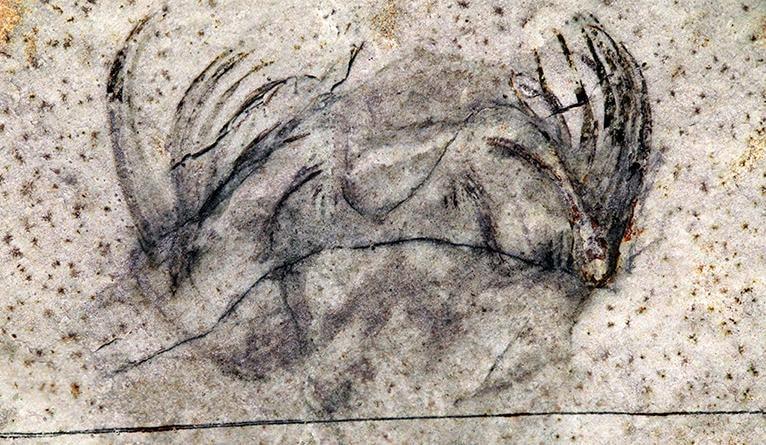 fossile prédateur marin