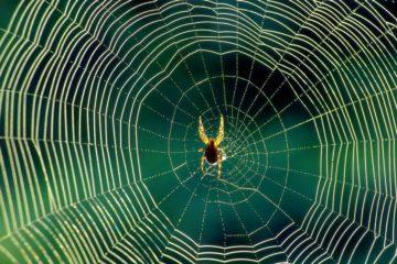 araignée soie toile graphène nanotube carbone