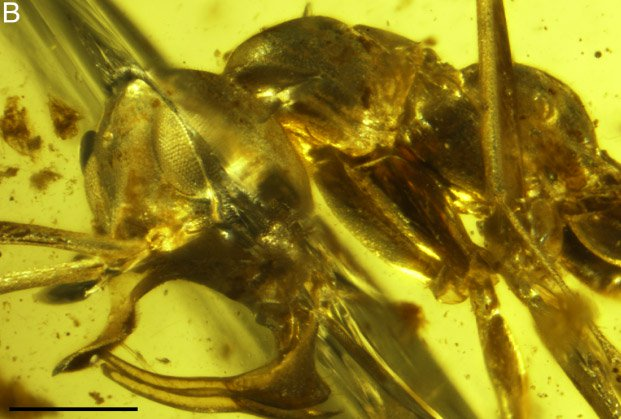 machoire fourmi vampire aspire sang lance métal metallique
