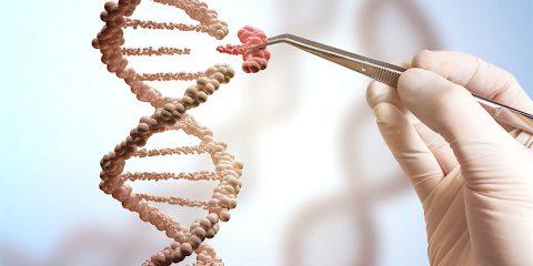 edition genomique adn