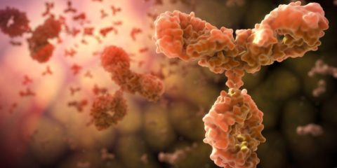 allergenes-anticorps-systeme-immunitaire-allergies