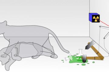 chat schrödinger expérience paradoxe erwin boîte deux boîtes chen wang yale university