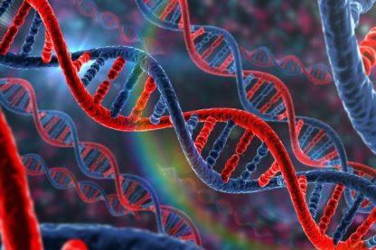 adn gènes modification embryons humains