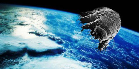 tardigrade organise survie dans l'espace espace