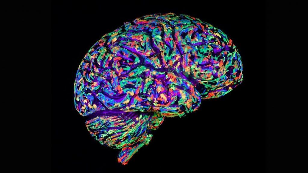 creation de cerveaux humains culture etudier recherches maladies neuronales biologie