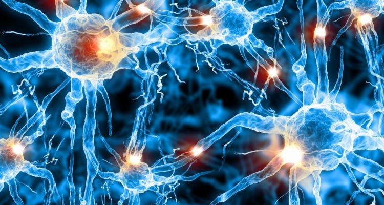 système nerveux traitement synapses fibres nerveuses