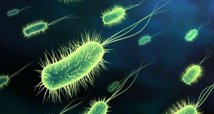 bactéries antibiotiques antimicrobiens microbes résistance