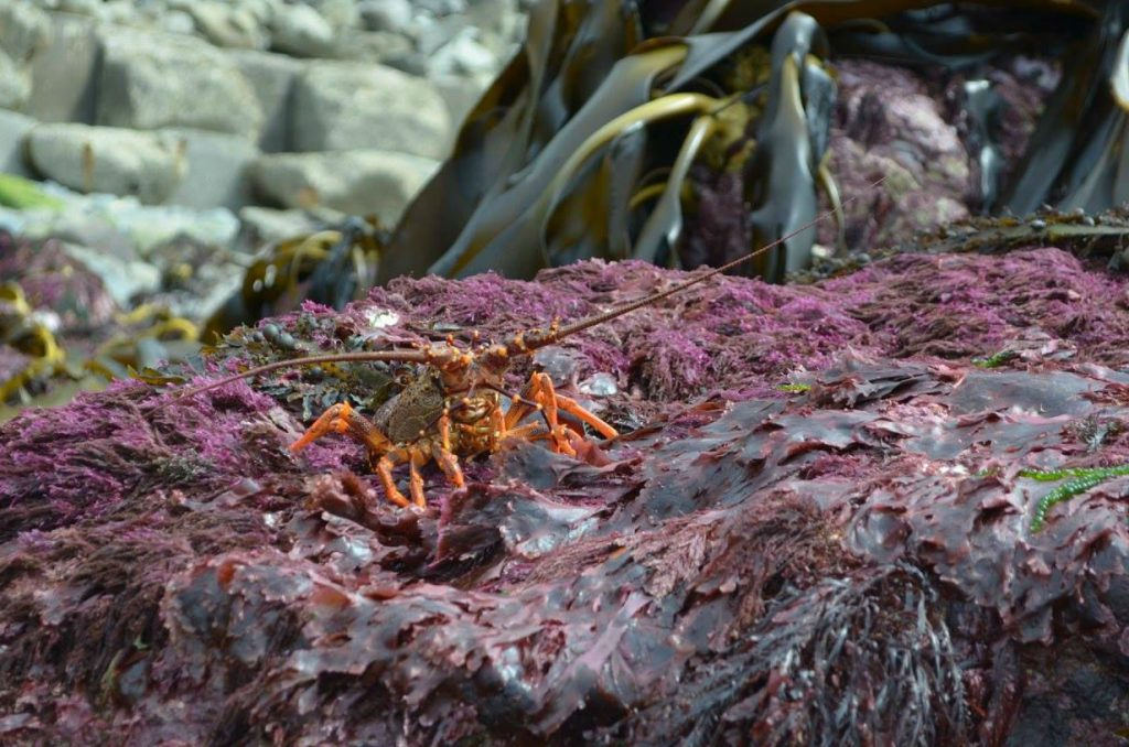 crustacé nouvelle zélande tremblement de terre fond marin