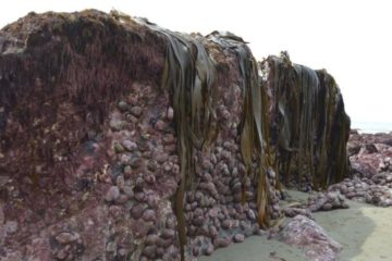 fond marin en surface nouvelle zélande
