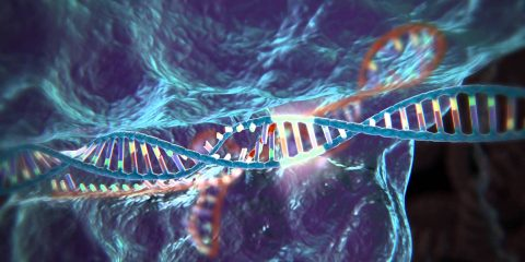 modification genetique crispr cas 9 cancer