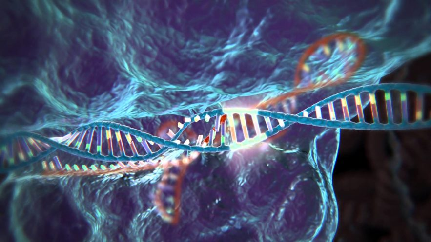 modification genetique crispr cas 9 cancer