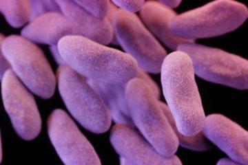 CDC bactérie augmente meme avec présence antibiotiques CRE
