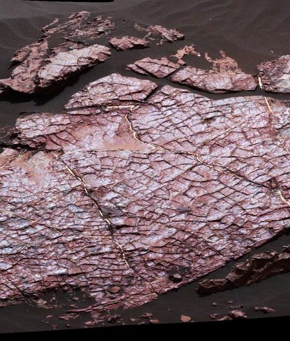 dessication fissures roche boue mars surface curiosity nasa