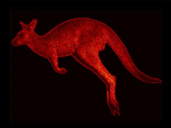 hologramme kangourou