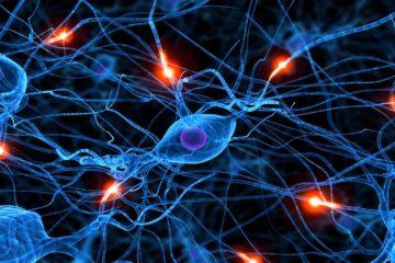 neurone synapse cerveau maladies communication