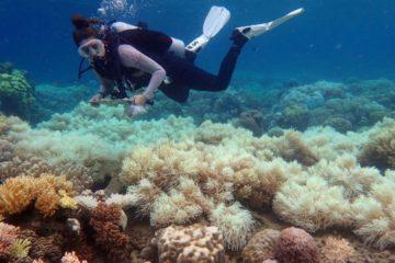 blanchissement grande barrière de corail australie rechauffement climatique