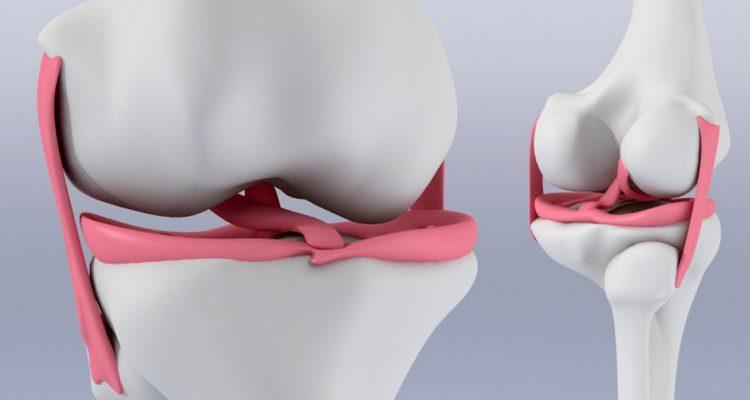 genou menisque cartilage hydrogel
