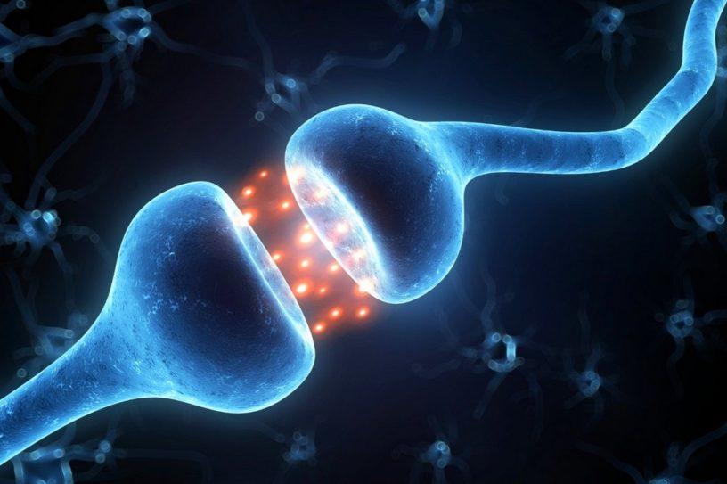 synapse electronique memristor cerveau intelligence artificielle IA