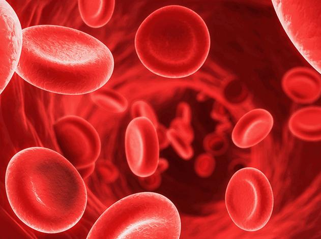 cellules rouges souches sanguines
