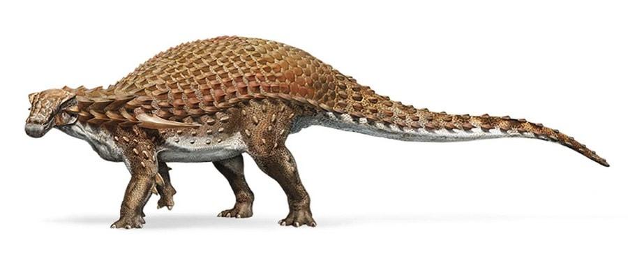 fossile nodosaure conserve dinosaure dessin créature