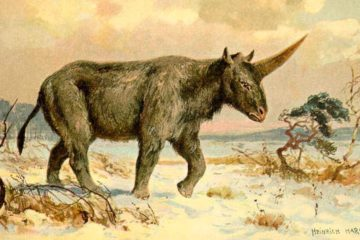 licorne de siberie rhinoceros prehistorique
