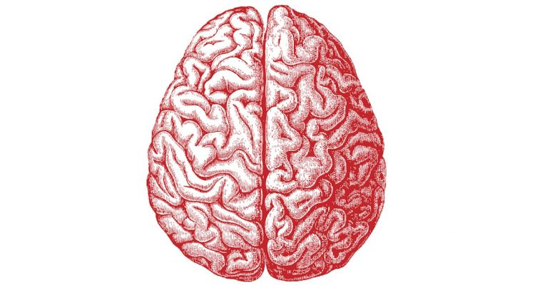 cerveau humain dessin
