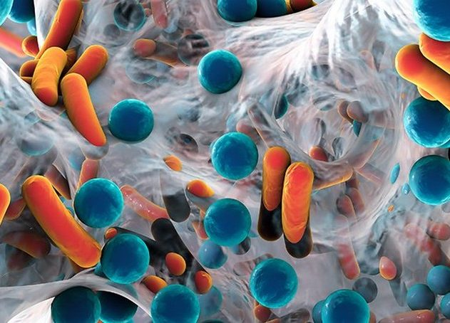 bacteries intestinales microbes