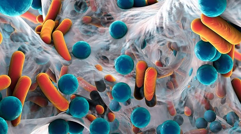 bacteries intestinales microbes