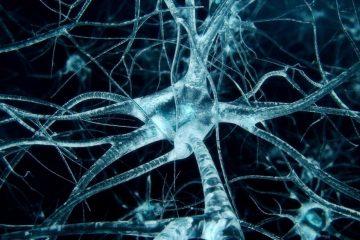 neurone cerveau structure atomique protéine tau maladie neurodegenerative alzheimer