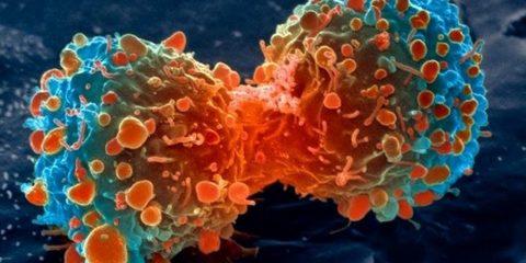 cancer cellule cancéreuse traitement fda