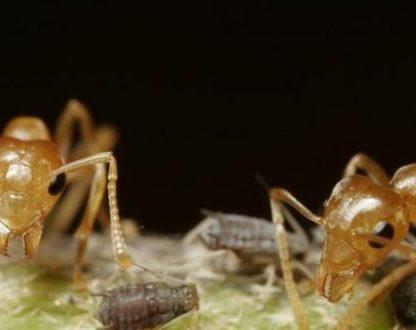 fourmis mandibule machoire pièce