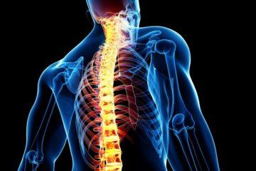 moelle epiniere medecine neurones