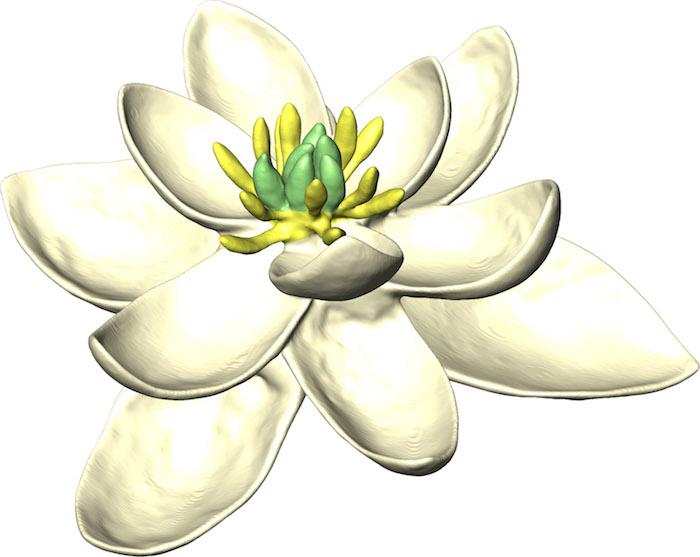 premiere fleur
