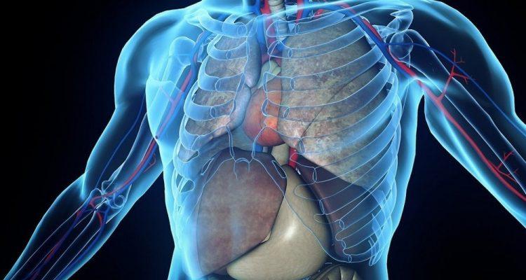 voir à travers le corps humain tissus corporels caméra technologie
