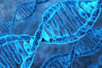 adn organisme semi synthetique