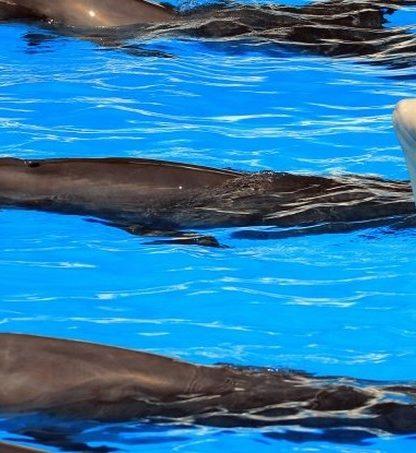 beluga dauphin communication inter espece sons