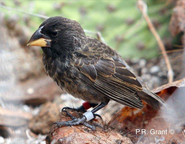 galapagos big bird oiseau nouvelle espece