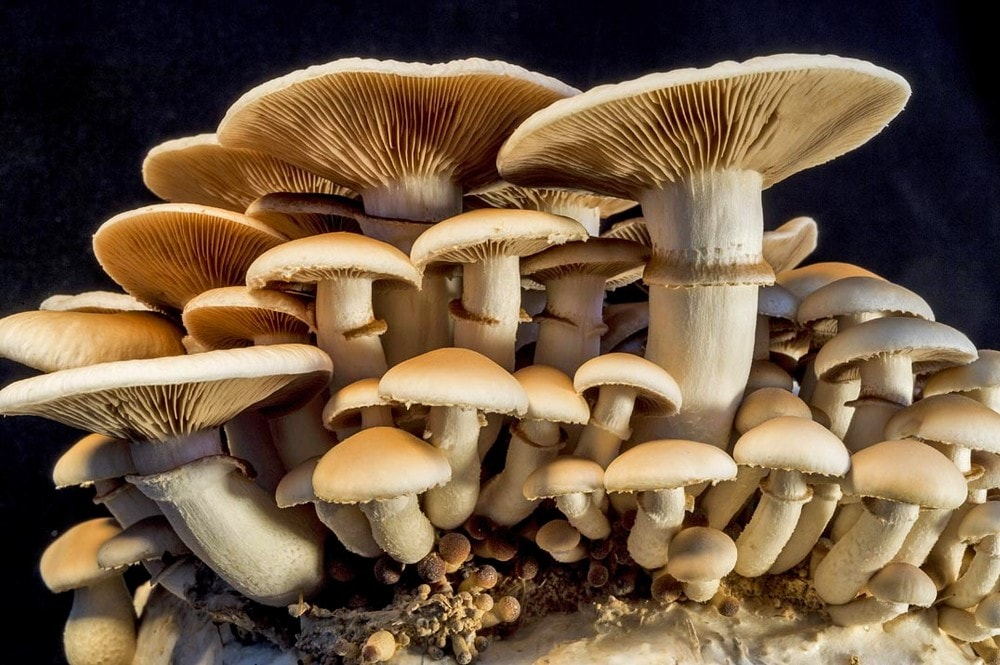 champignons atmosphere terrestre plantes