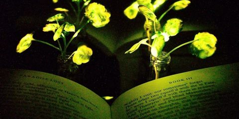 plante lumineuse lumière nanobionique plante