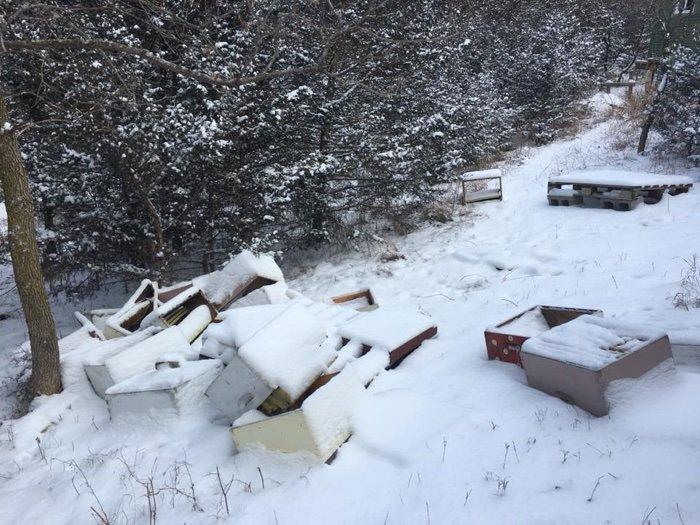 abeilles ruches vandalisme environnement pollinisateurs