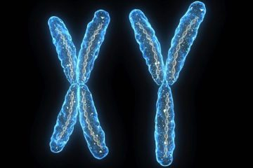 chromosomes chromosome x y disparition