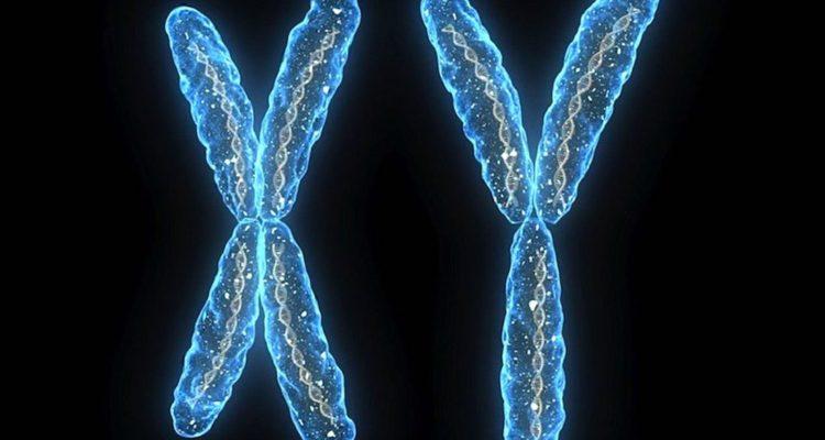 chromosomes chromosome x y disparition