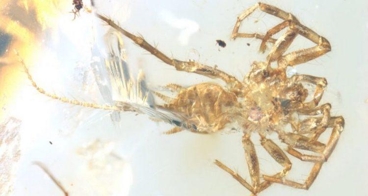 araignée scorpion queue découverte ambre birmanie arachnide